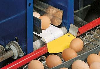 Kiaušiniais iš savo lygmens patenka ant transporterio, borteliai padeda tolygiai paskirstyti kiaušinius ( Big Dutchman įranga)
